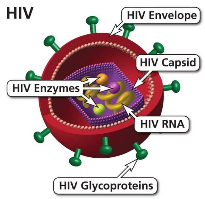 HİV Virüsü