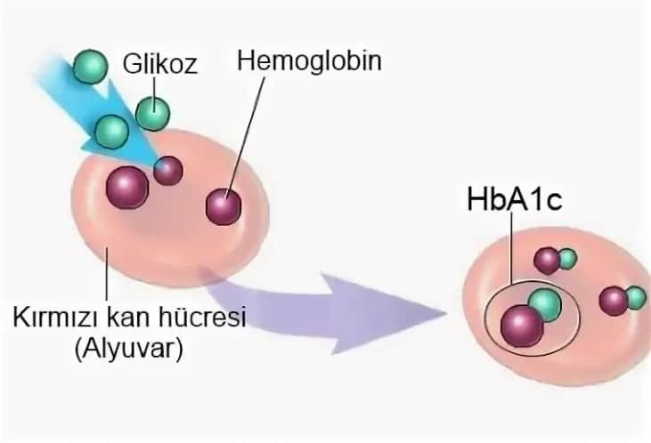 Hemoglobin AC1 Testi Nedir